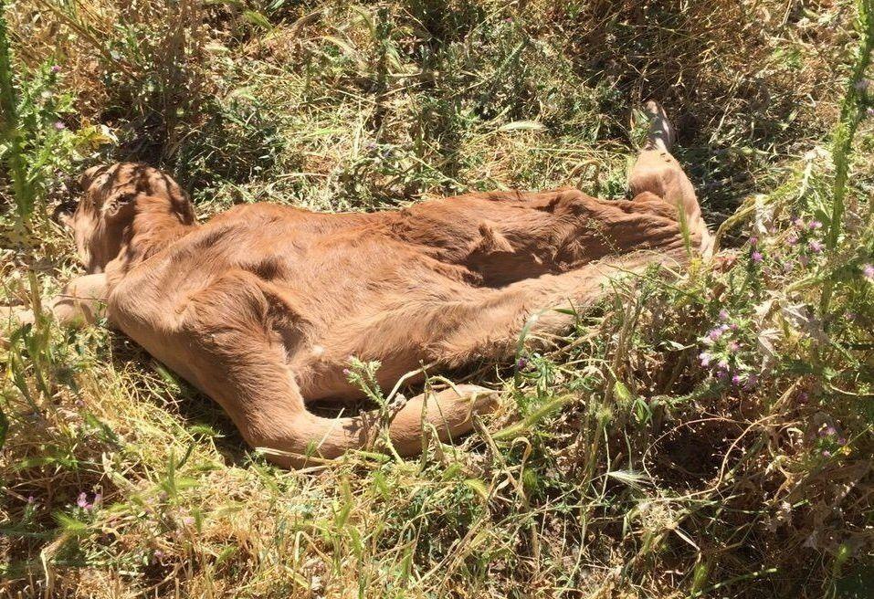 Agroseguro telefono recogida animales muertos