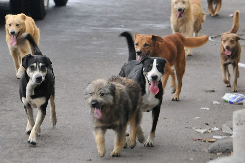 El 88% de los perros recogidos por Scooby en lo que va de año carecían de microchip identificativo