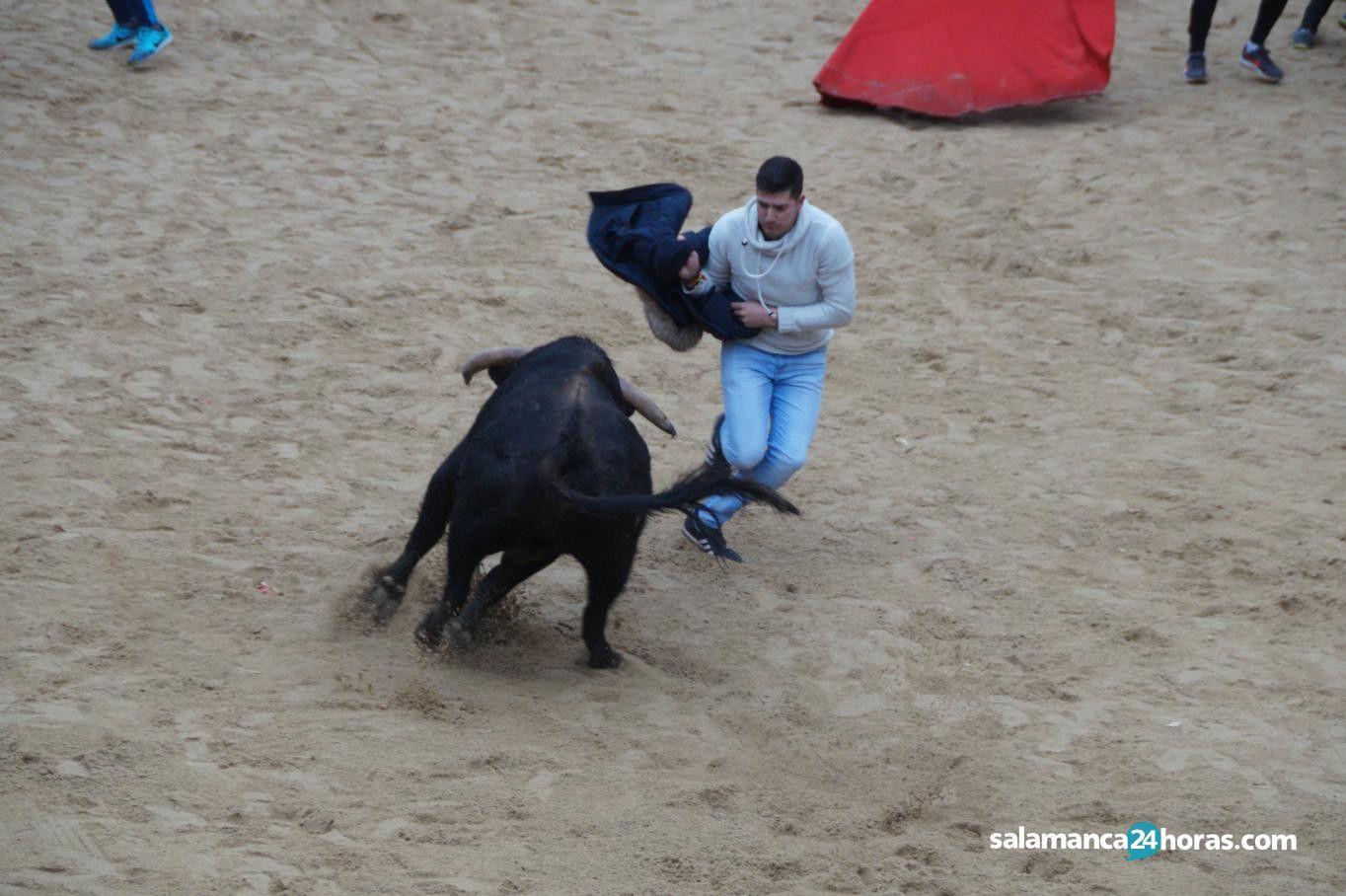 Capea vespertina del domingo del carnaval del toro 2018 for Salamanca 24 horas