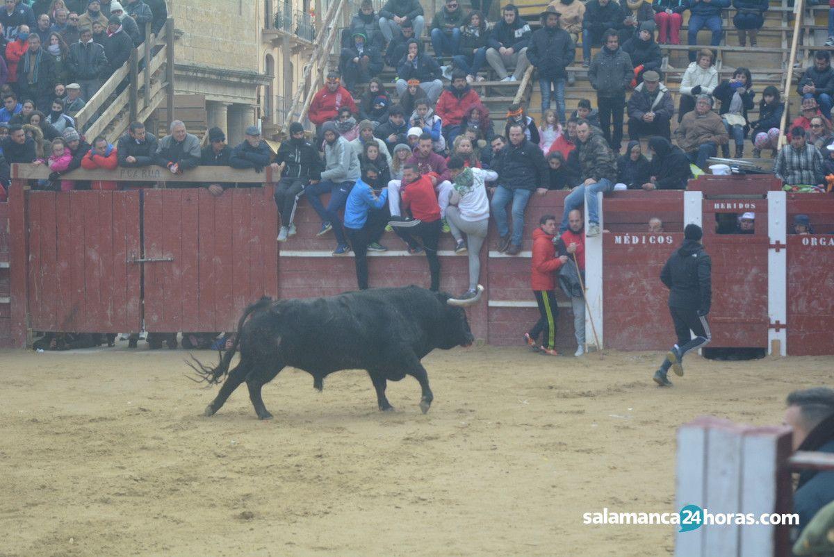 Toro del aguardiente 2018 for Salamanca 24 horas