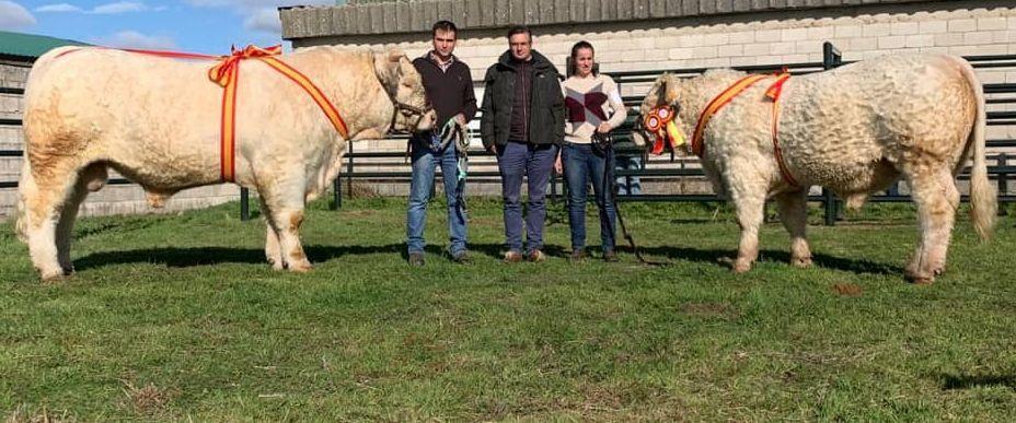 Dos ganaderías salmantinas de charolés triunfan en la Feria Agroganadera de Trujillo - Salamanca 24 Horas