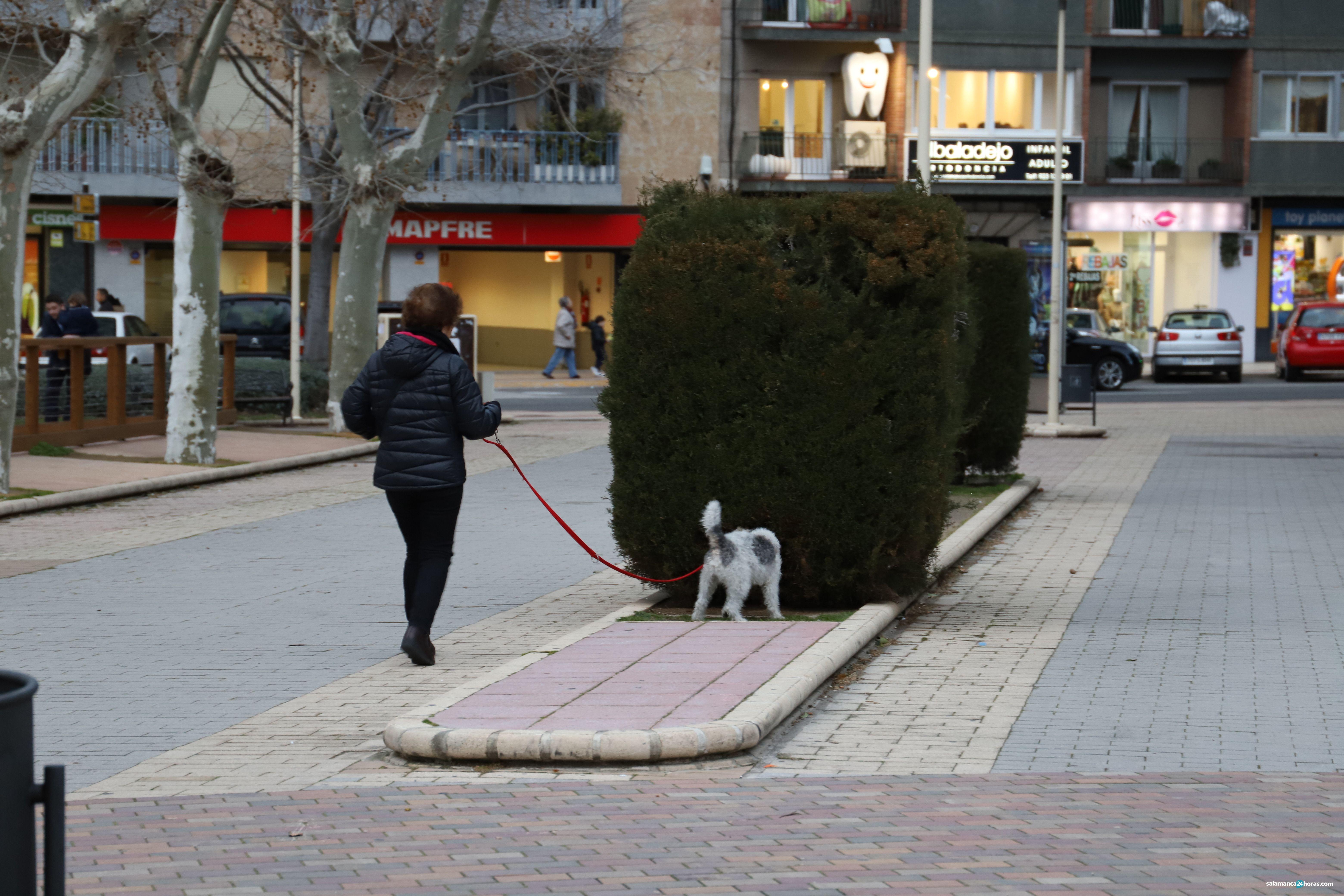 Los veterinarios difunden un decálogo para atender a las mascotas y recomendaciones para las clínicas veterinarias