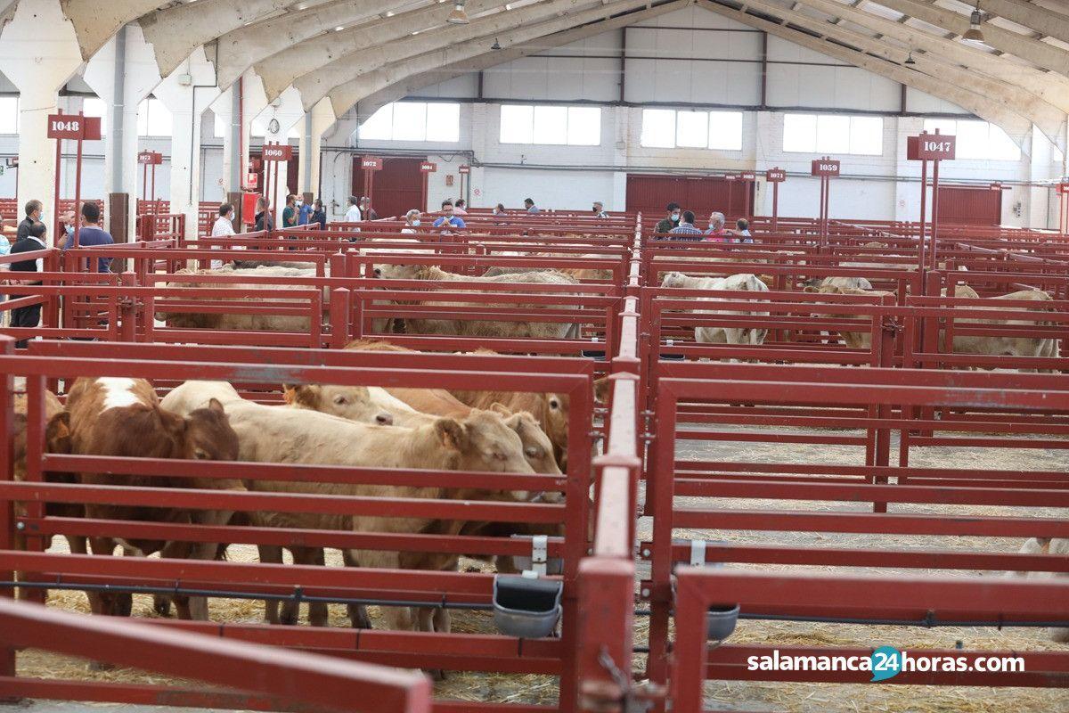 Mercado ganado JotaWhatsApp Image 2020 06 22 at 12.25.28 (17)