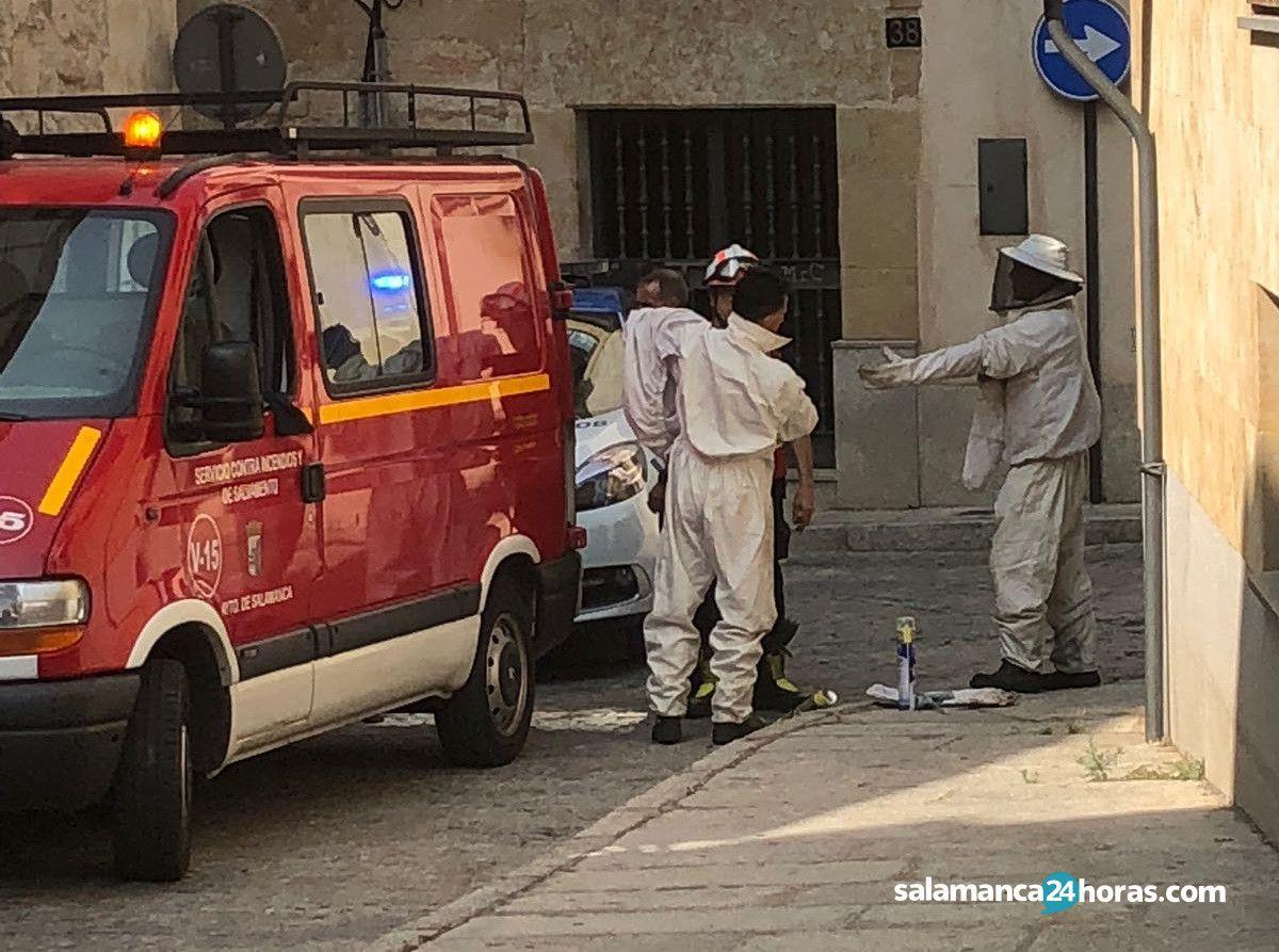 Bomberos calle Carniceros avispa