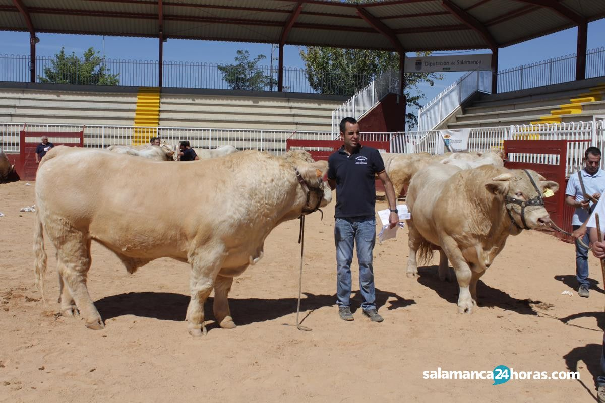 Subasta de ganado Salamaq 2018 (77)