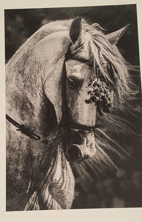 PREMIO FOTOGRAFIA 2 SEGUNDO Rostro de caballo, u00c1ngel M. Serrano Montero