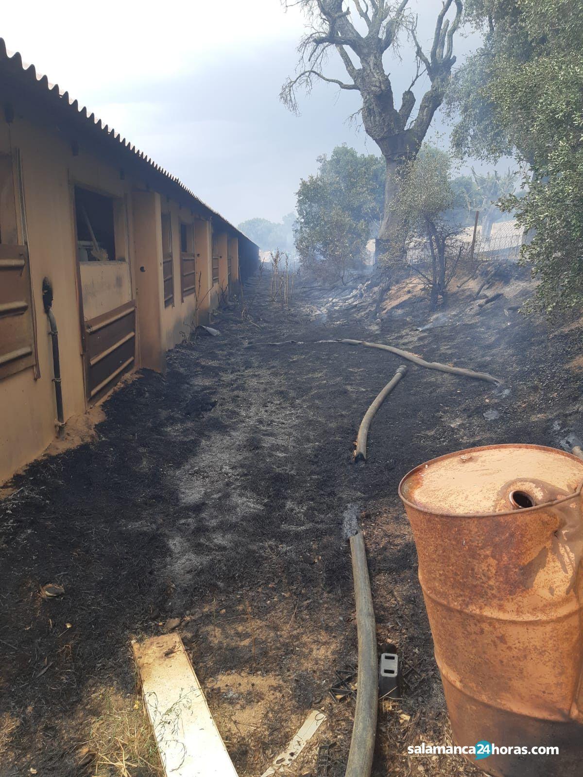 Incendio en valdelosa (1)