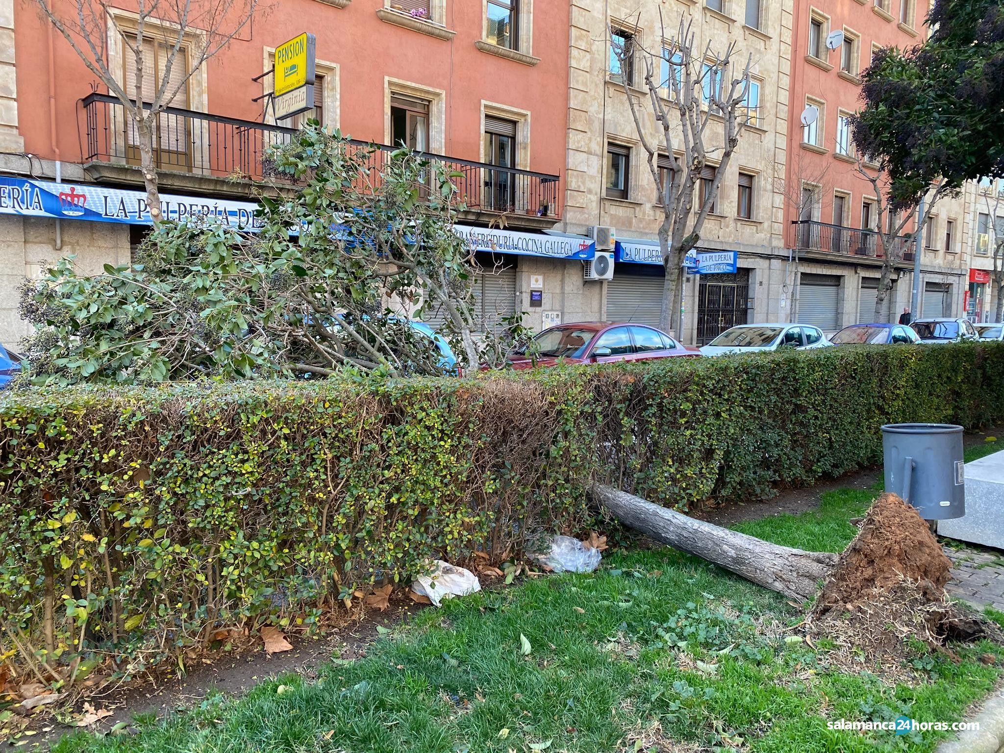 árbol caído en avenida París (2)
