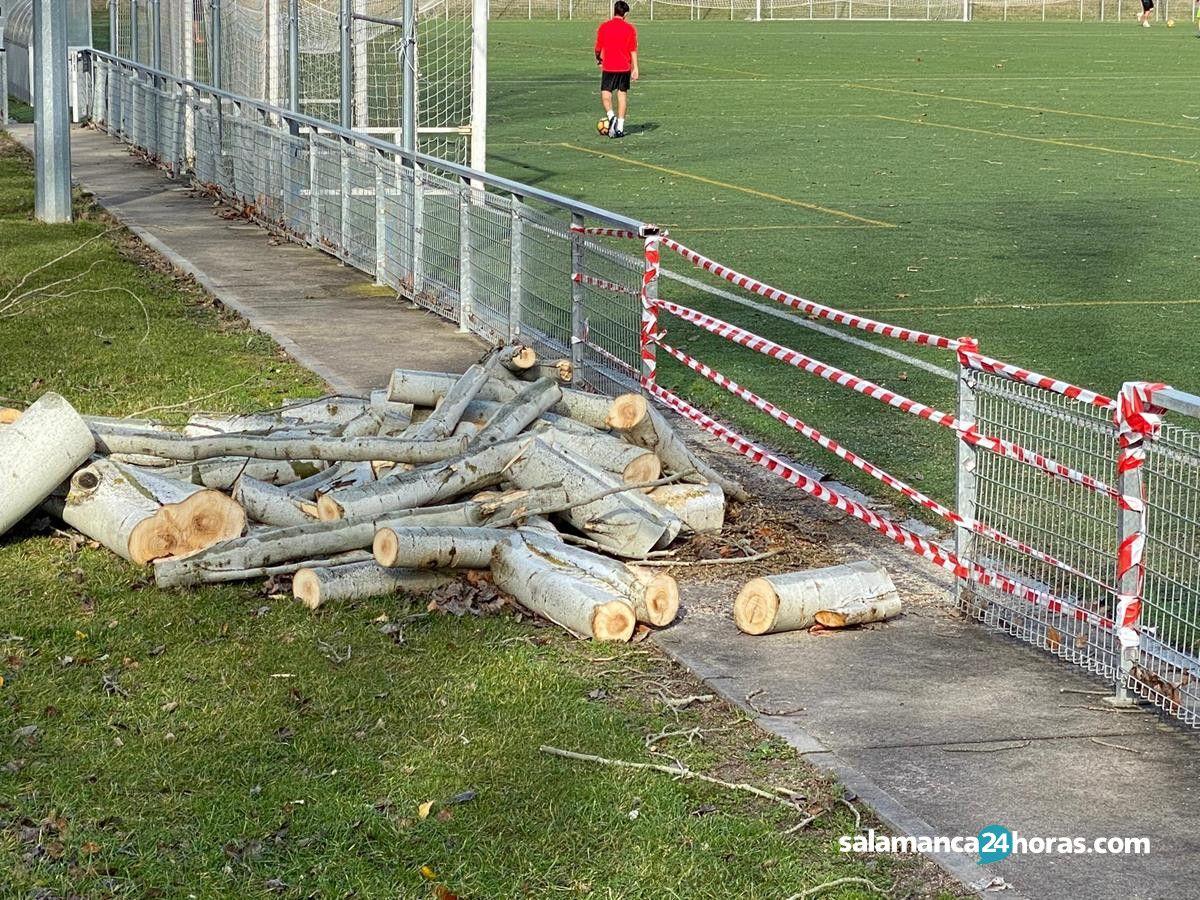 Árboles caídos en la Ciudad Deportiva de La Aldehuela (3)
