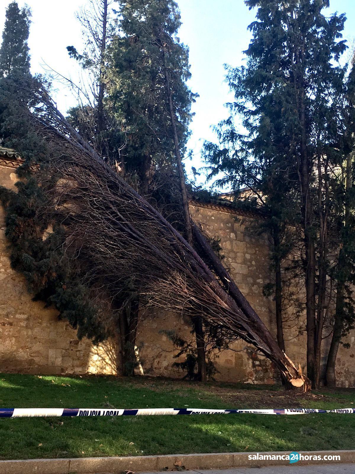 Árbol caído calle Rosario