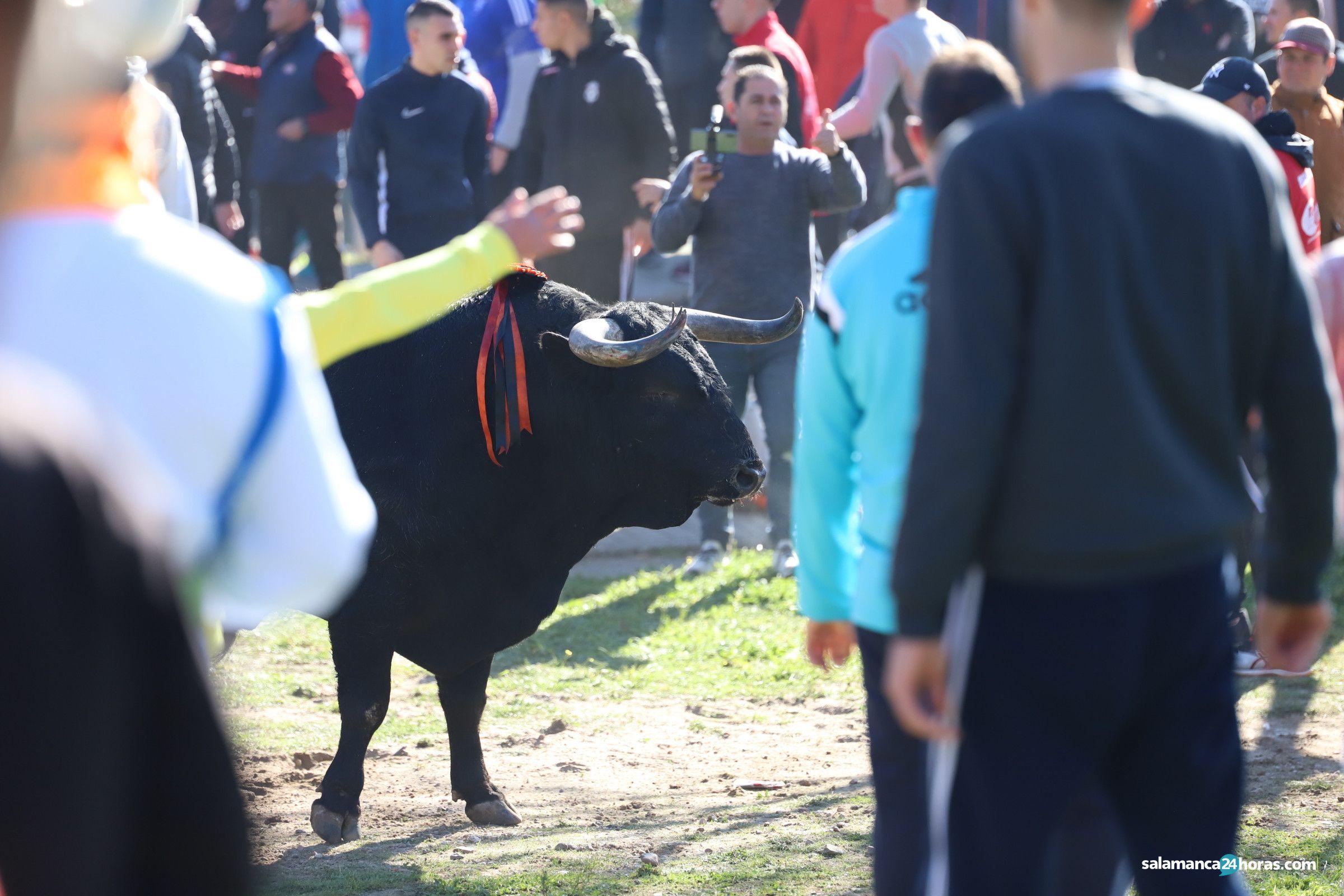 Toro del Antruejo 2020 Carnaval del Toro (13)