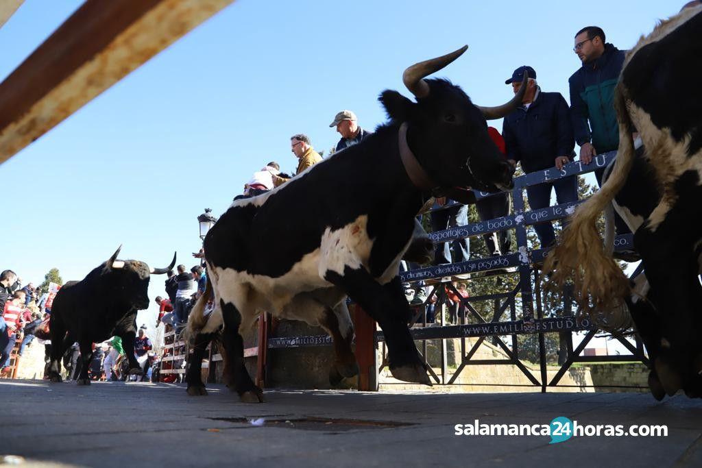 Encierro del sábado Carnaval del Toro 2020 (13)