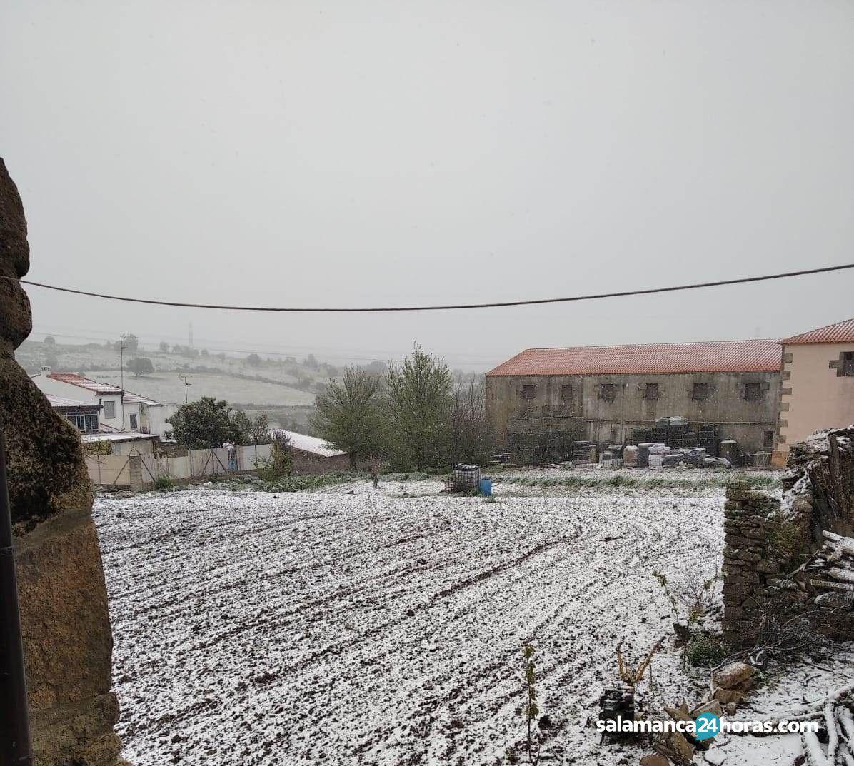 Nieve en Pereña (1)