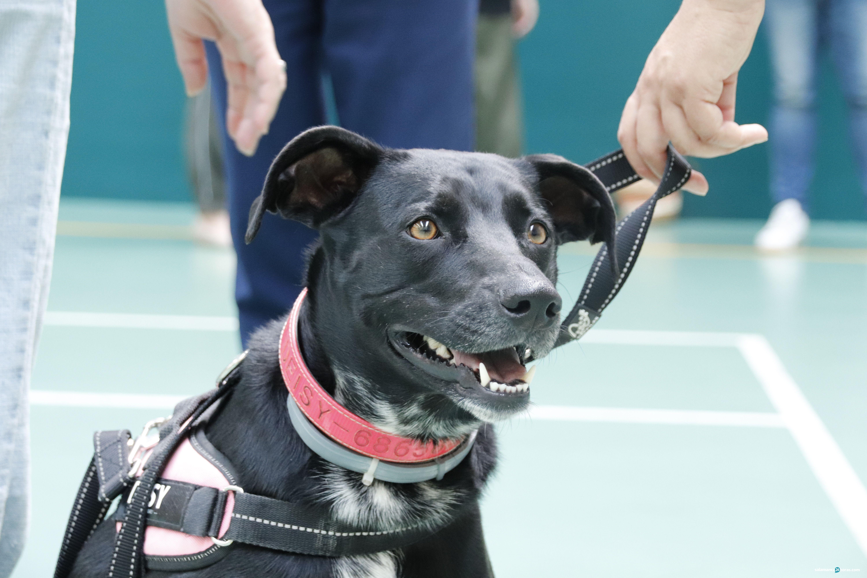 Perros viocan policía local (31)