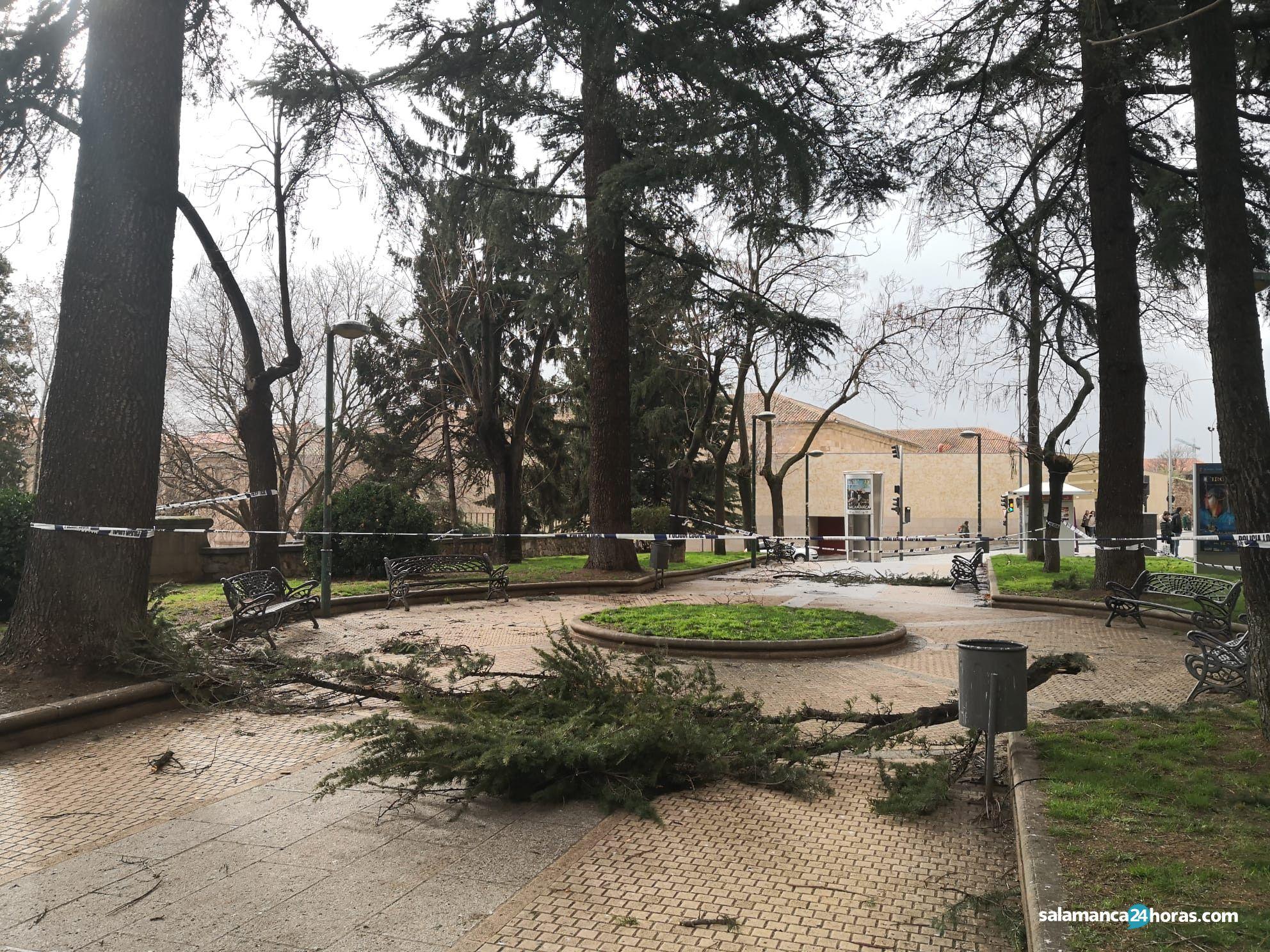 árbol caído en parque San Francisco