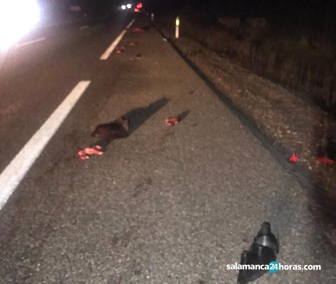Jabali?es accidenteWhatsApp Image 2020 02 10 at 08.14.18 (1)