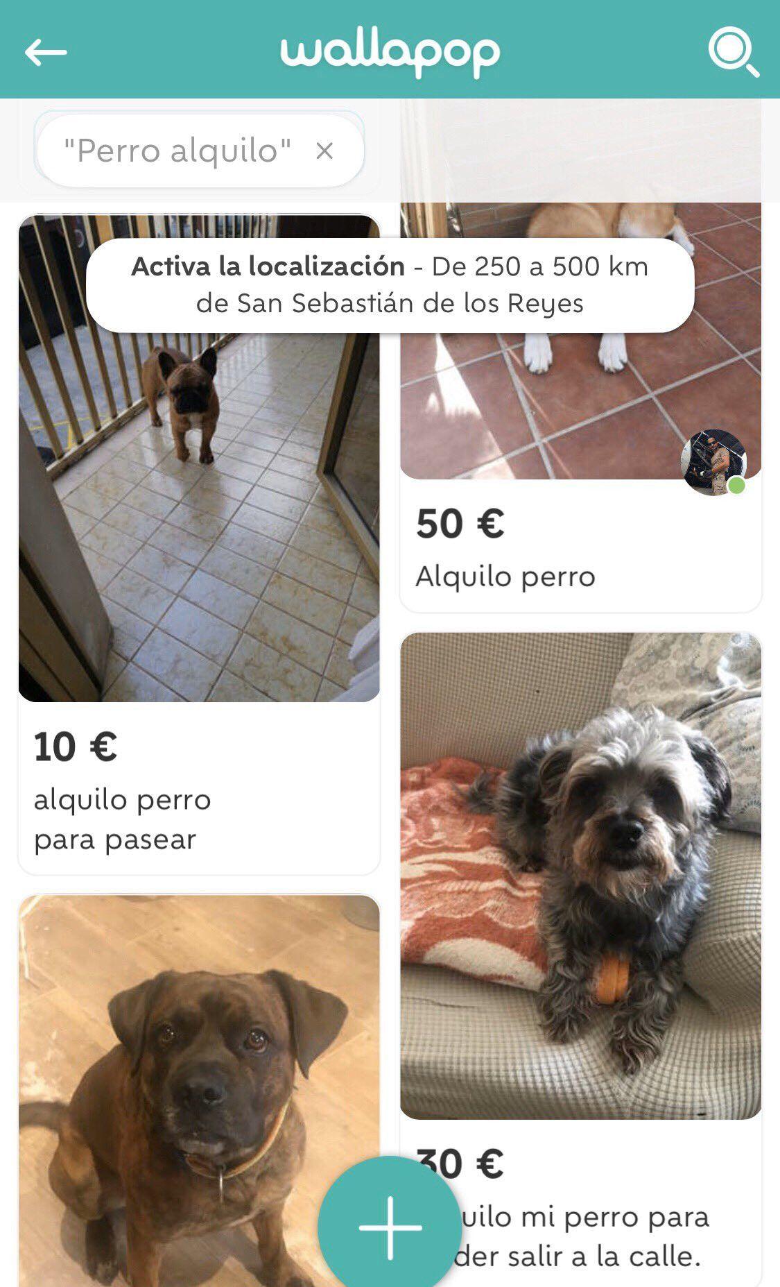 Alquiler de perros