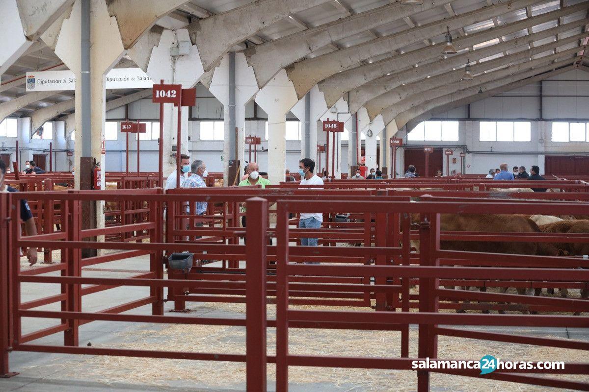 Mercado ganado JotaWhatsApp Image 2020 06 22 at 12.25.28 (1)