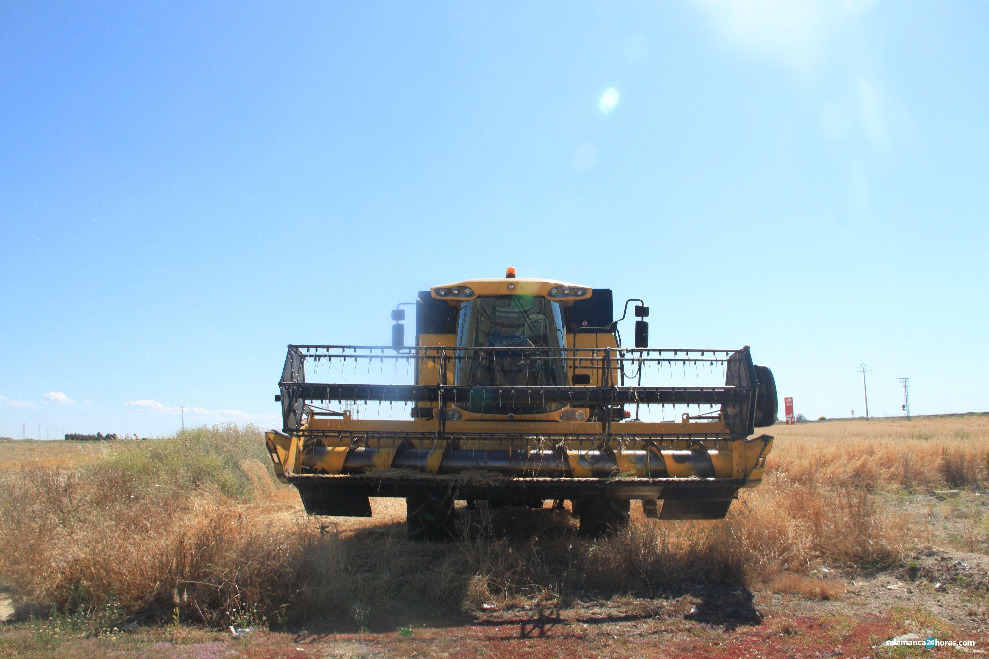 Cereales cosecha junio 2020 RMFIMG 7423