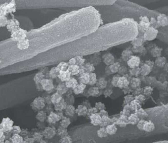 Coronavirus pulmones