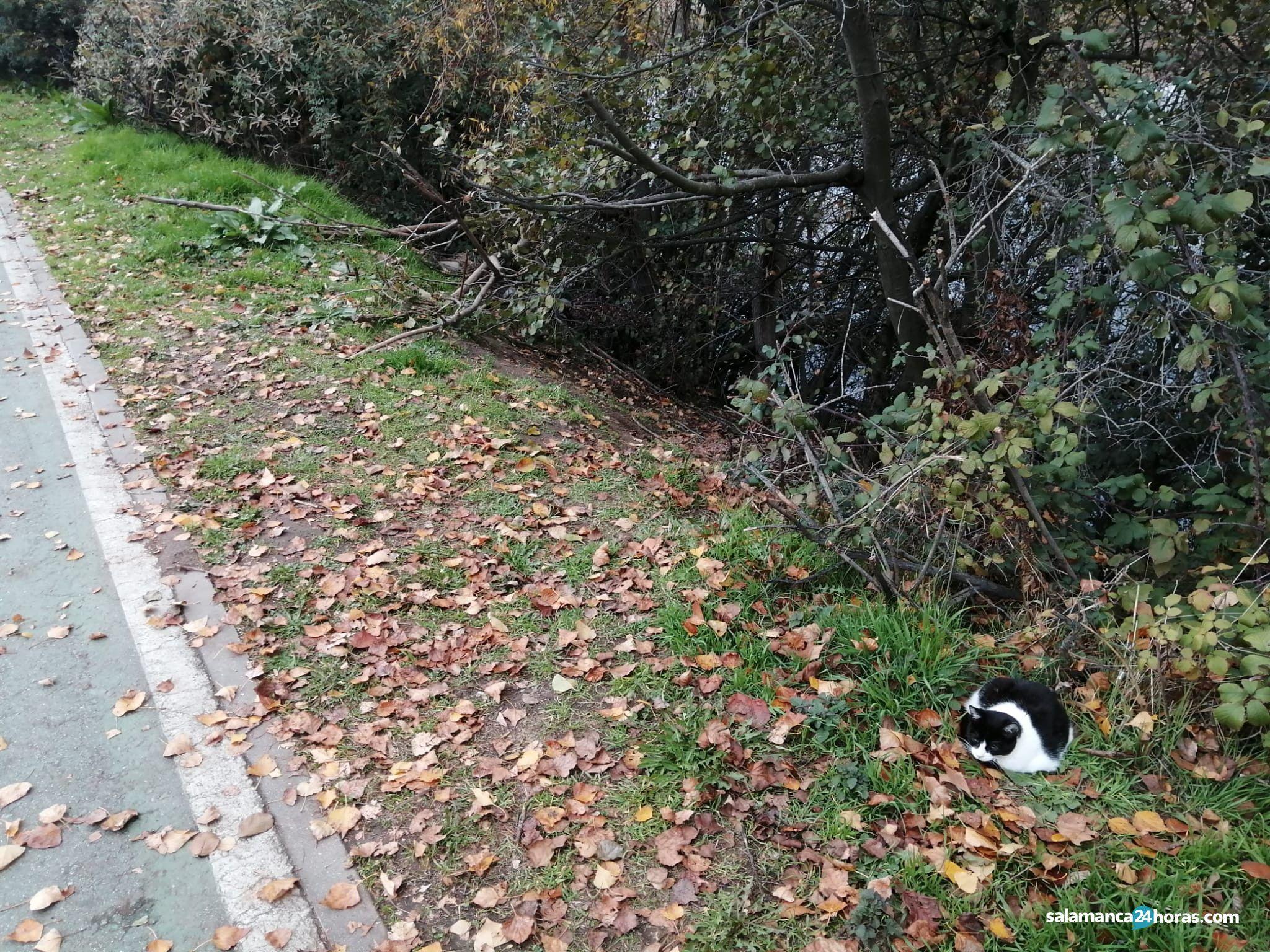 Colonia de gatos de la Vía Helmántica río Tormes (13)